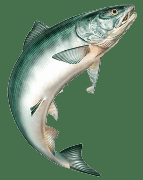 wędkarstwo łososiowe